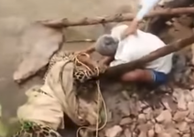 Man in India attempts to rope leopard during rescue operation but gets attack instead