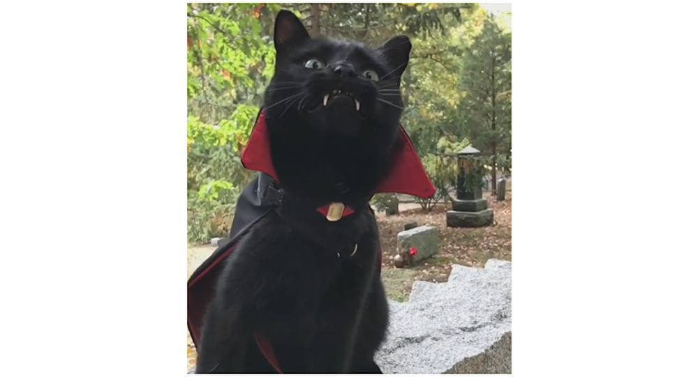 Black Cat With Vampire Fangs