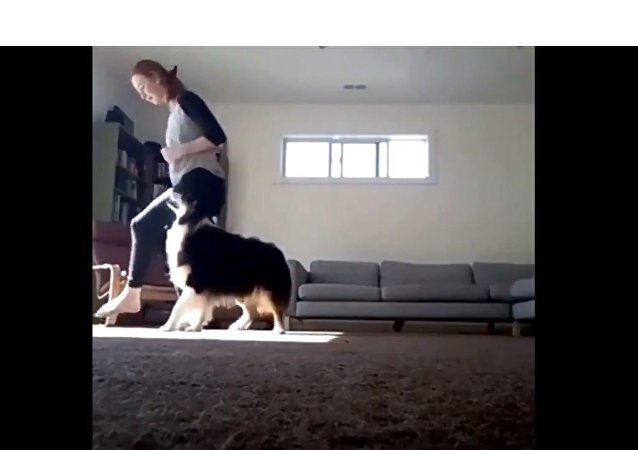 Girl and Her Dog Show Off Their Moves