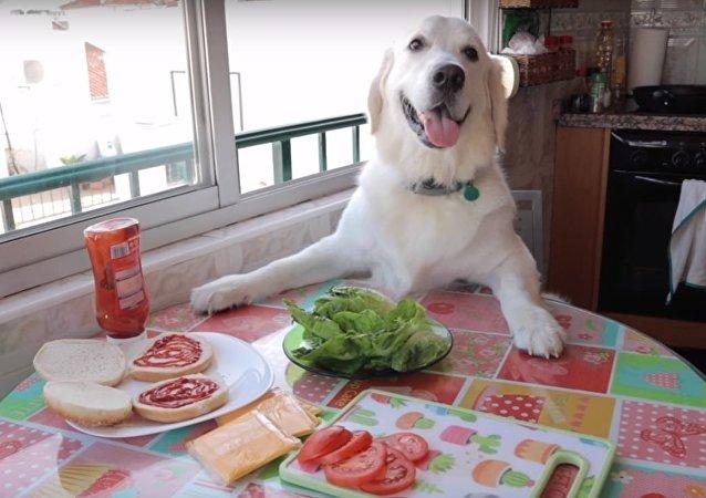Dog Makes Hamburger