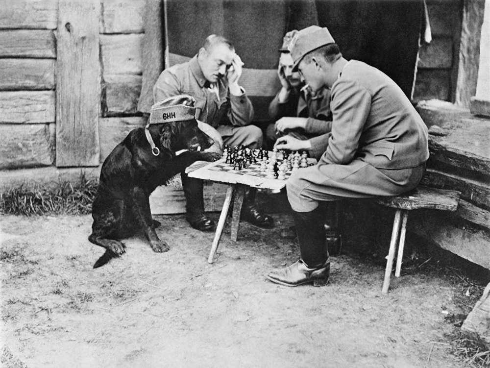 This image of a dog playing chess with Austrian soldiers is in a new book of rare and unseen First World War photographs produced by the Imperial War Museum