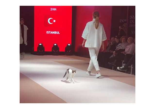 Feline Steals the Fashion Show in Turkey