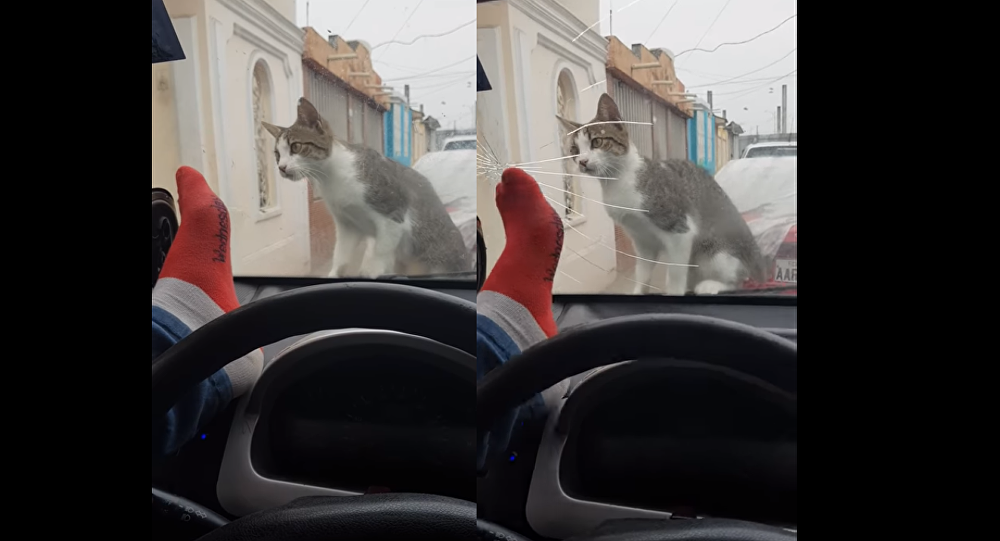 Motorist Immediately Regrets Attempt to Scare Cat