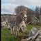 Donkey trying to sing