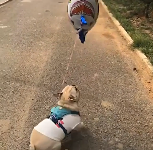 Dog and Balloon