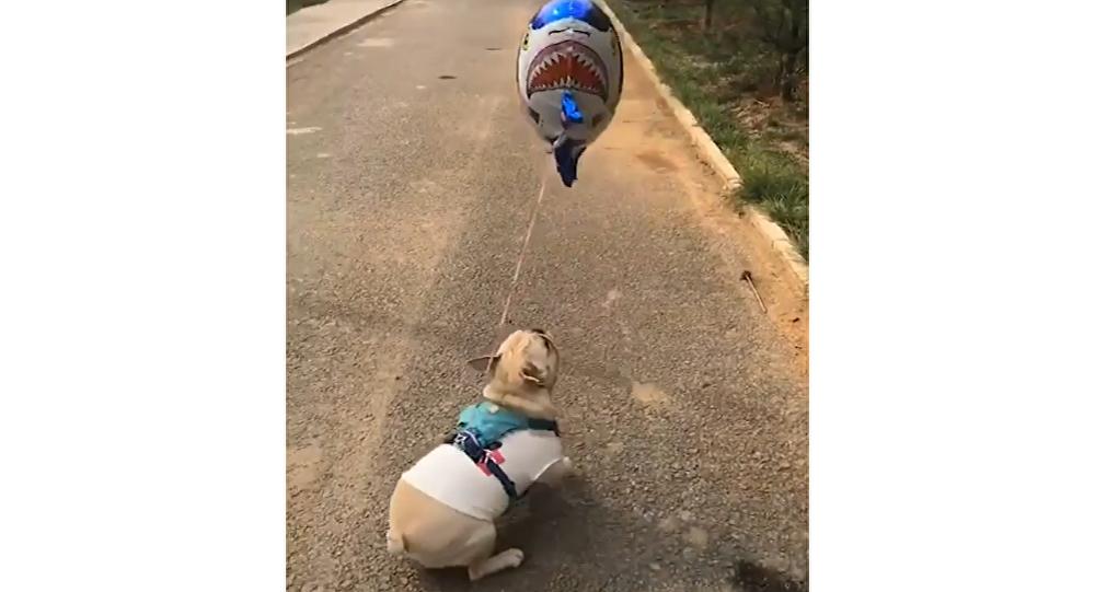 Dog and Balloon