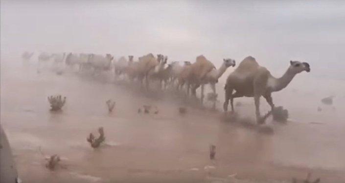 Rare: Saudi Desert Flooded