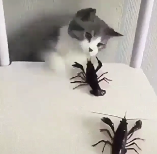 Cat VS Crayfish