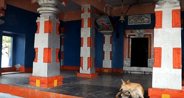 Dog sits inside Naradagadde Hindu temple in Karnataka