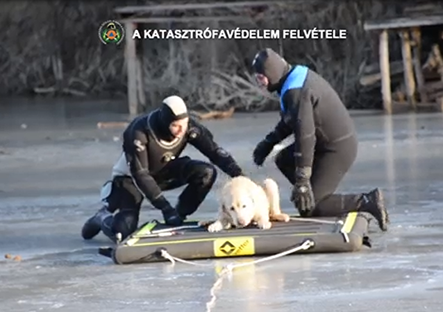Hungarian Firefighters Save Canine Stranded on Frozen Lake