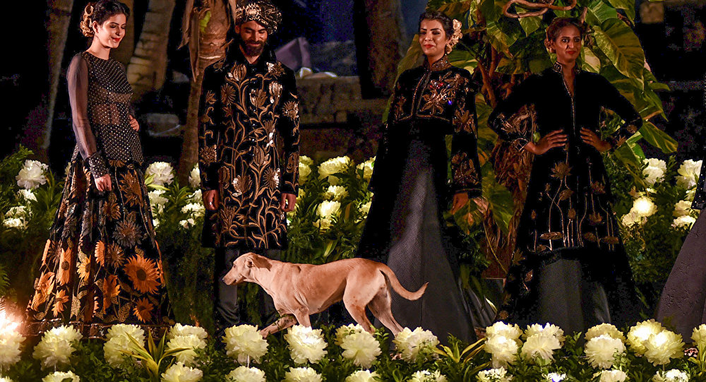 Street Dog Runs Onto Stage at Indian Fashion Event, Steals