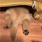 Golden Retriever is Hiding