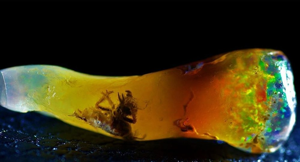Ancient Insect Found Preserved Inside Opal