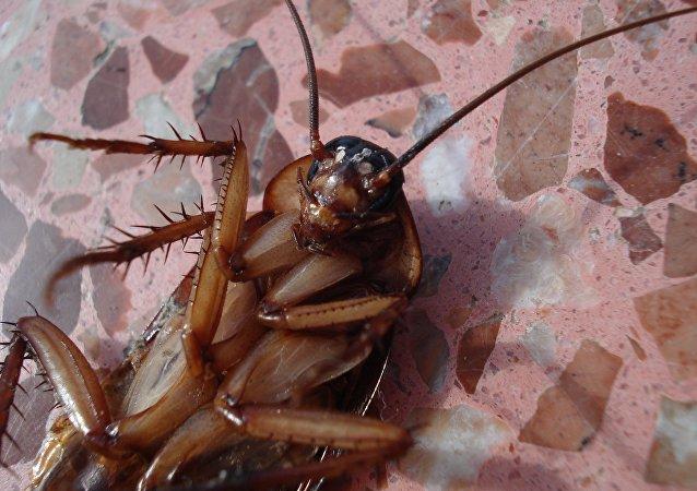 Dead cockroach, turned upside-down