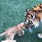 Tiger, lion, and dog
