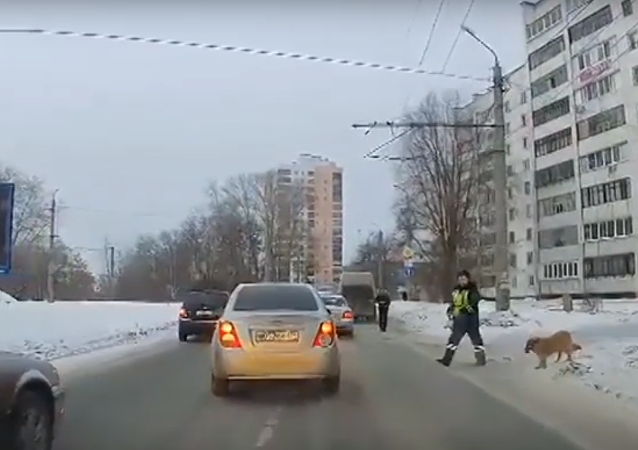 Traffic cop helps dog cross road in Chelyabinsk.