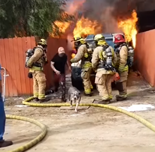 US Man Defies Firefighters, Runs Into Burning Home to Rescue Family Pit Bull