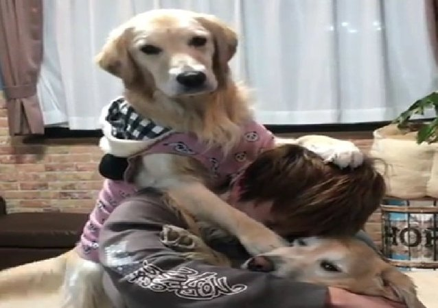Golden Retriever hug