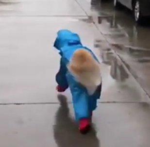 Golden Retriever raincoat