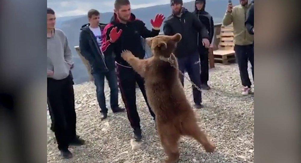 Нурмагомедов снова поборолся с медвежонком| UFC| ММА