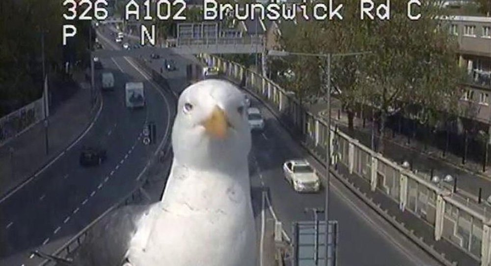 Birds caught on London traffic cam, named 'Graeme and Steve' by officials