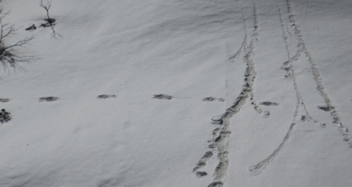 Footprints are seen in the snow near Makalu Base Camp in Nepal, in this picture taken on April 9, 2019 obtained from social media on April 30, 2019.