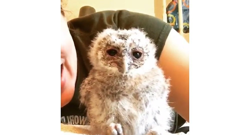 Baby owl makes funny moves