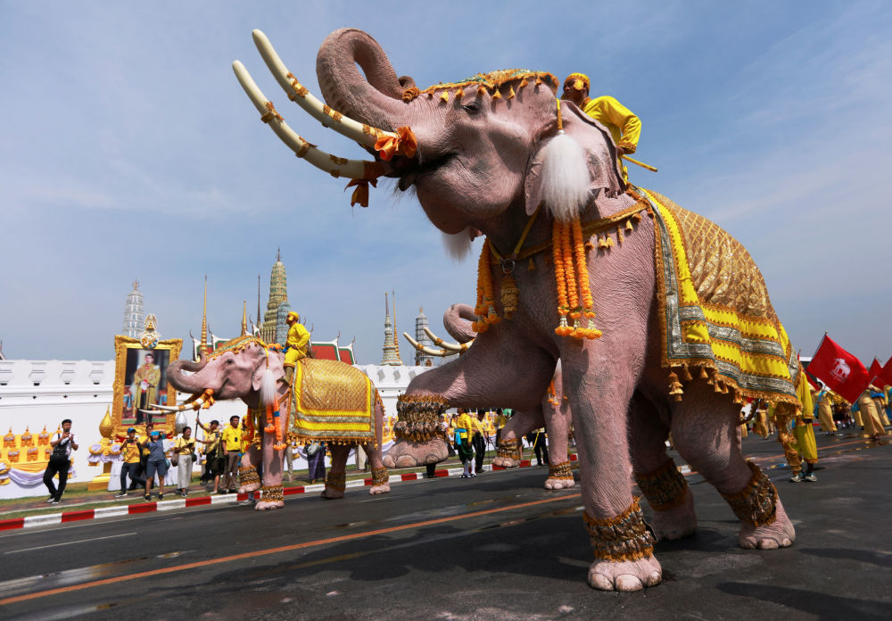 Ten Elephants from Ayutthaya Camp in Bangkok