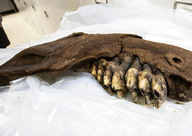 US Teen Finds 34,000-Year-Old Mastodon Jaw on Iowa Farm