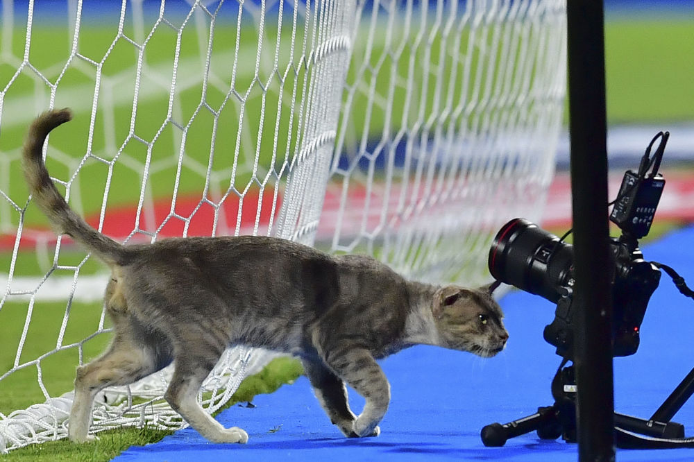A cat inspects the remote cameras during the 2019 Africa Cup of Nations (CAN) Round of 16 football match between Ghana and Tunisia at the Ismailia Stadium in the Egyptian city on July 8, 2019.