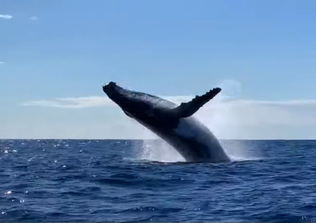 Priceless! Australian Charter Guests Witness Double Whale Breach