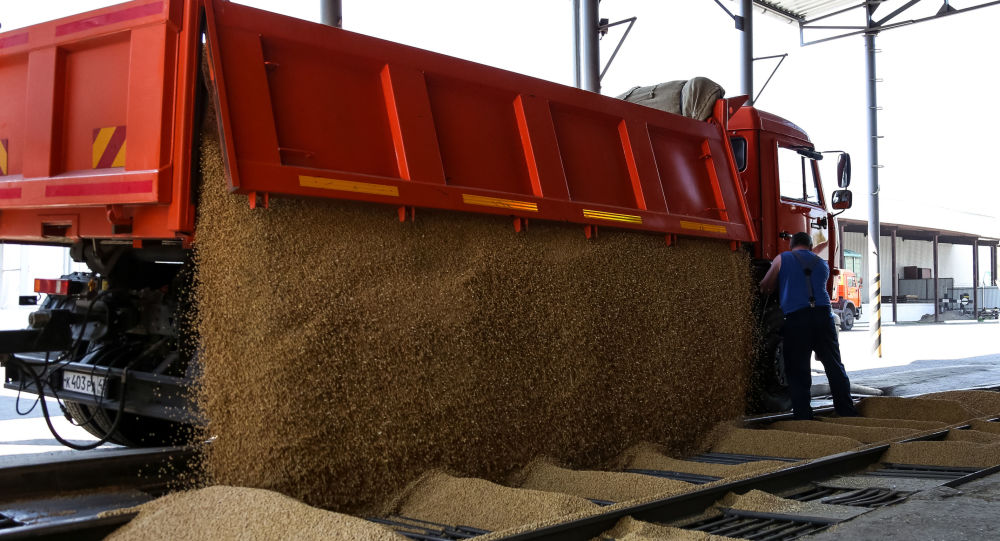 Soybean harvest in Russia, file photo.