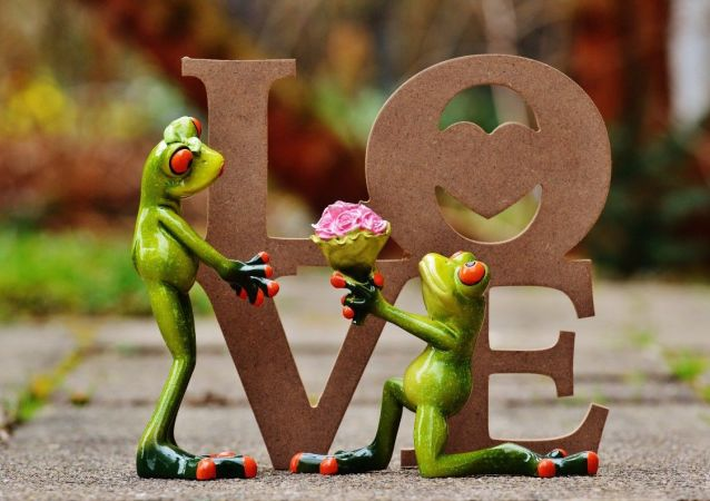Wedding of frogs