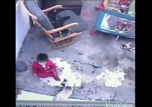A screenshot from a video. A cat saves a toddler.