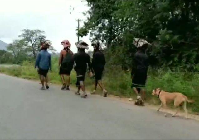 Karnataka: A stray dog has been following a group of 13 Ayyappa devotees, who are on a pilgrimage to Kerala's Sabarimala & has walked 480 km so far