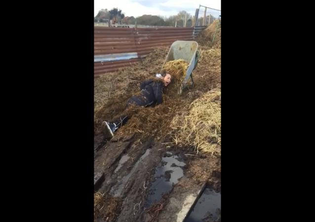 UK Farm Helper Ends Up Covered in Manure After Losing Footing