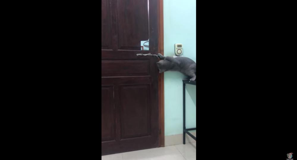 Vietnamese Cat Overcomes Locked Door, Makes Great Escape