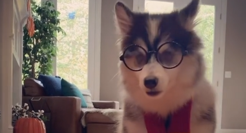 Harry Potter Puppy