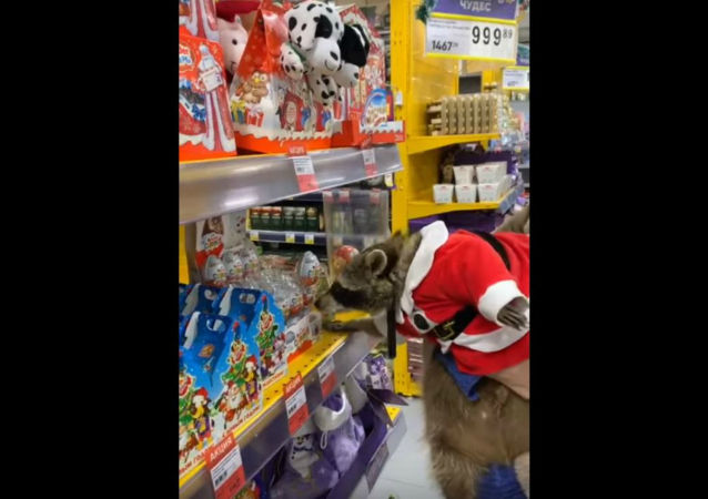 Festive Raccoon Goes Holiday Shopping at Russian Supermarket