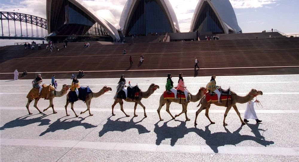 Camels in Australia: How many camels are there in Australia?