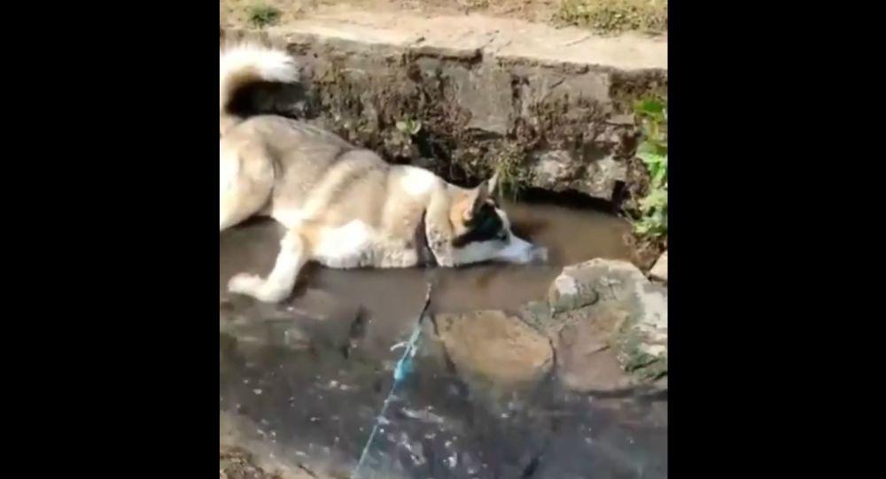 Dog Makes Bubbles