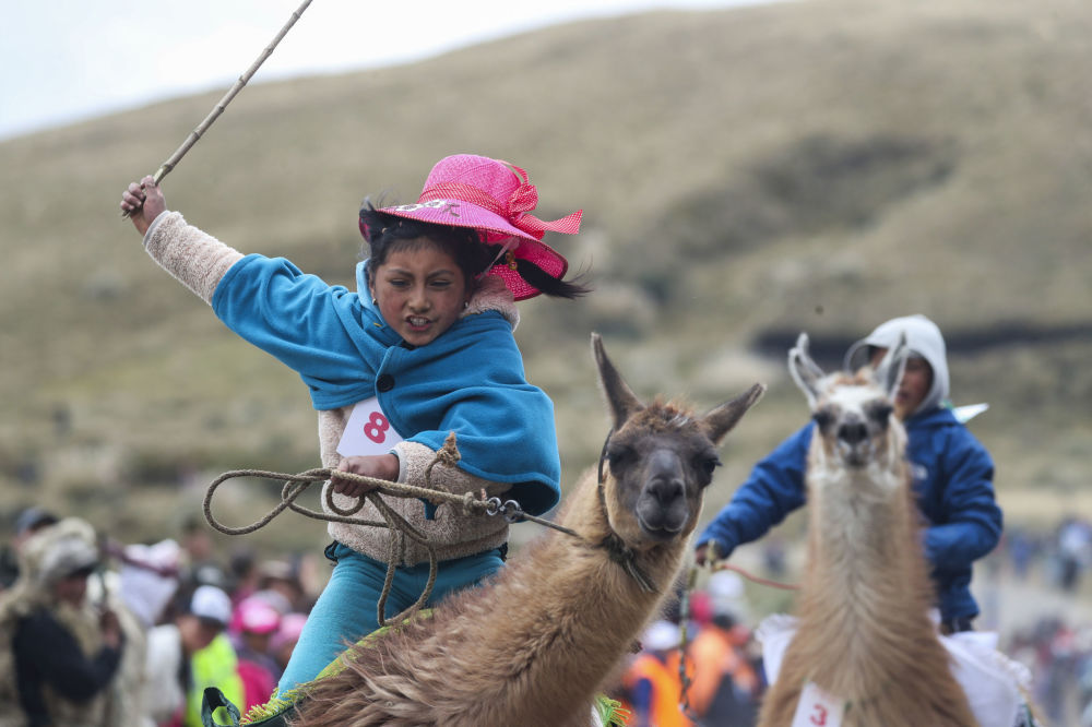 Milena Jami whips her llama to win the first place in the race for children of ages seven and eight at the Llanganates National Park, Ecuador, Saturday, Feb. 8, 2020.