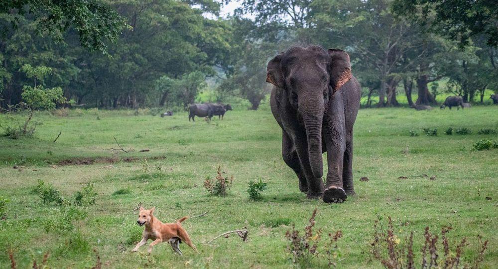 Things Turn Ugly at Indian Wedding as Elephant Goes Berserk and Wreaks Havoc - Video