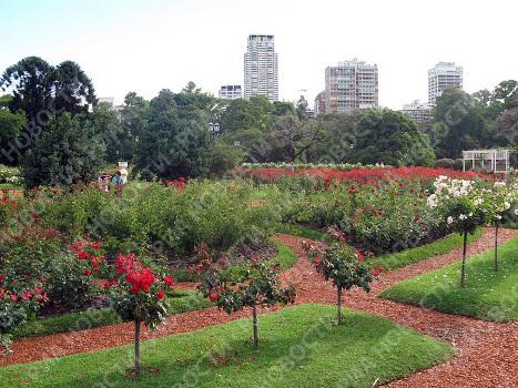 Розарий в центральном парке Буэнос-Айреса