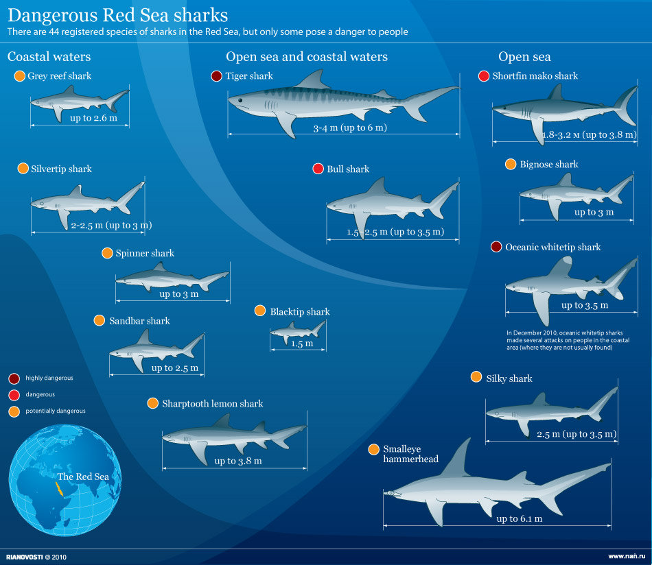 Dangerous Red Sea sharks