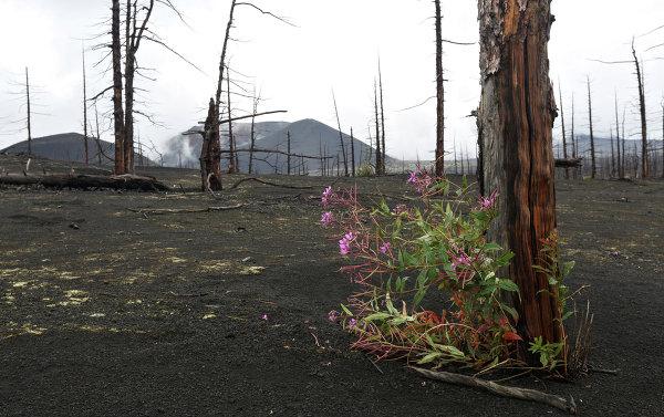 Природный парк Вулканы Камчатки