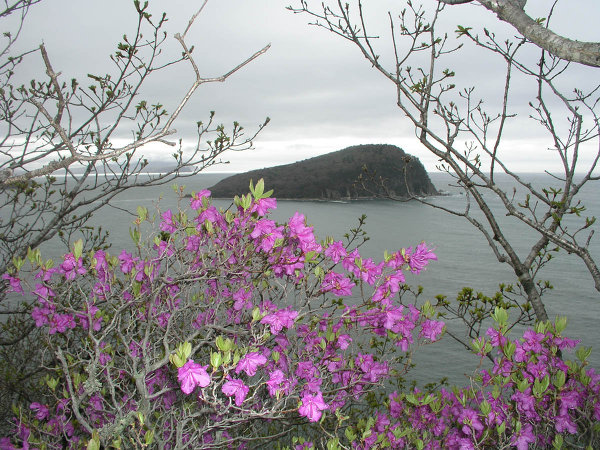 Petrov Island