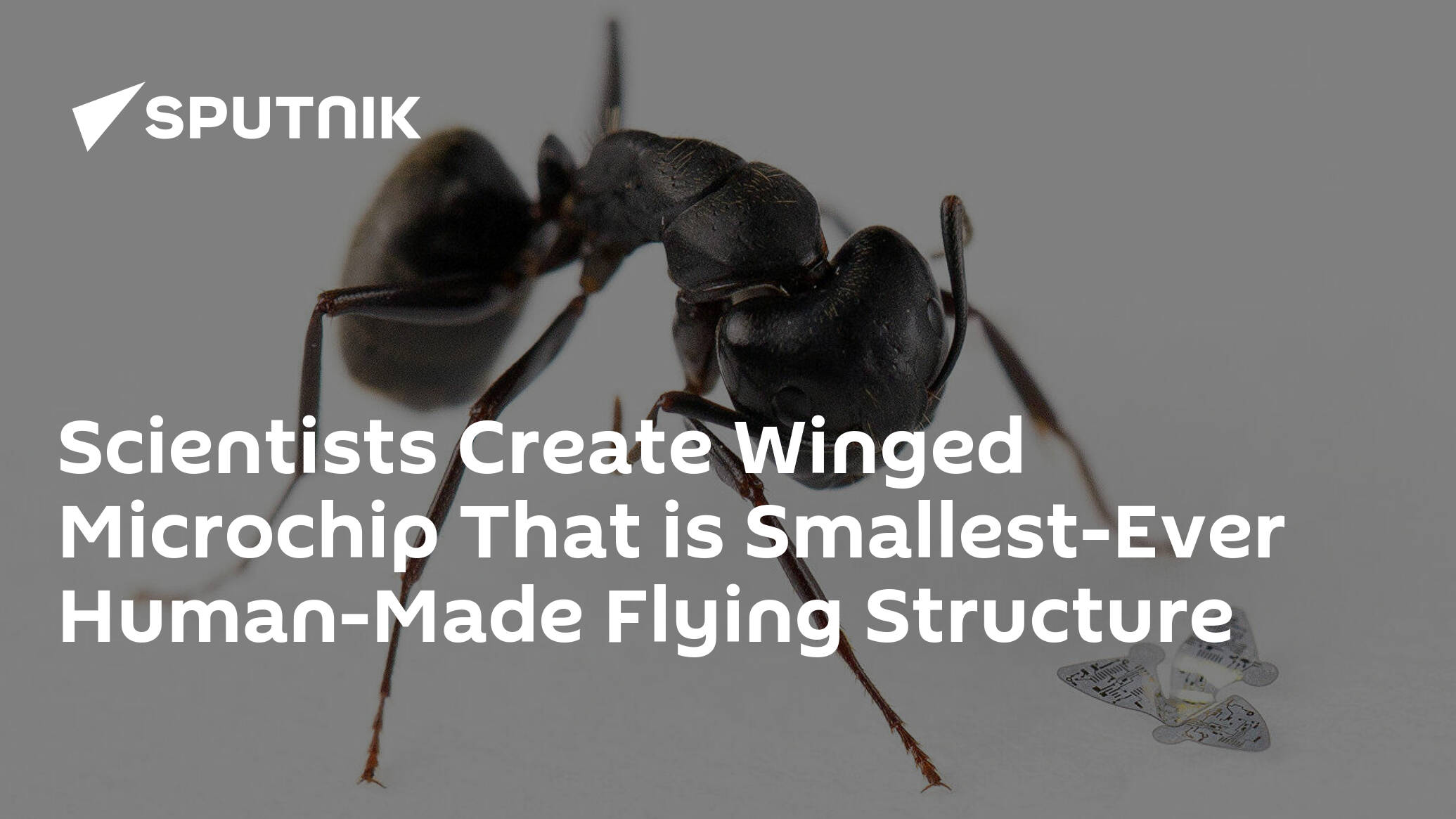 Scientists Create Winged Microchip That is Smallest-Ever Human-Made Flying Structure