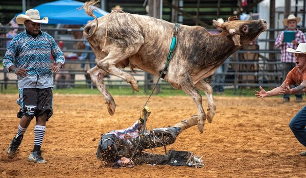 A bull throws its rider off during the God and Country rodeo held at the Hayseed Cowboy church on 4 July 2020, in Thaxton, Mississippi.   - Sputnik International