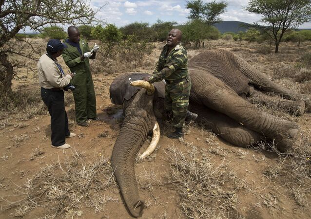 'Novel Disease' May be Behind Hundreds of Elephant Deaths in Botswana. Botswana officials have warned that a new pathogen may be to blame for the deaths of hundreds of elephants in the country.